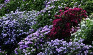 Oasi Zegna: paradiso del detox tra fioriture di rododendri e pic-nic botanici