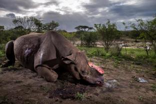 Wildlife Photographer of the Year 2017: gli scatti vincitori