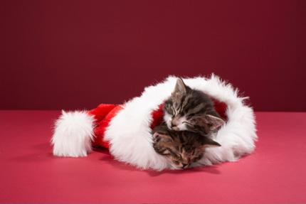 Il Natale dei nostri amici 4 zampe (foto Thinkstock)