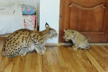 Ama circondarsi di animali domestici detiene in casa for Rivista di programmi domestici