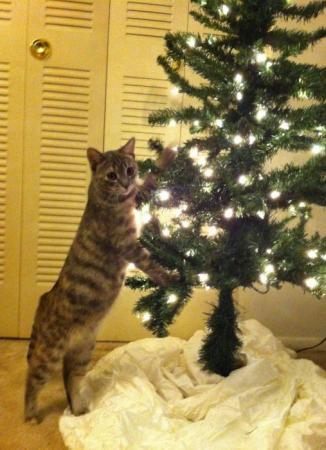 Albero di Natale anti-gatto, per averlo integro per tutte le feste