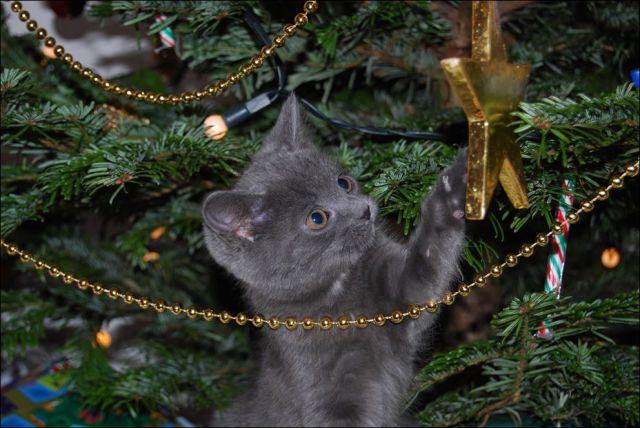 Gatti e alberi di Natale, un'attrazione fatale