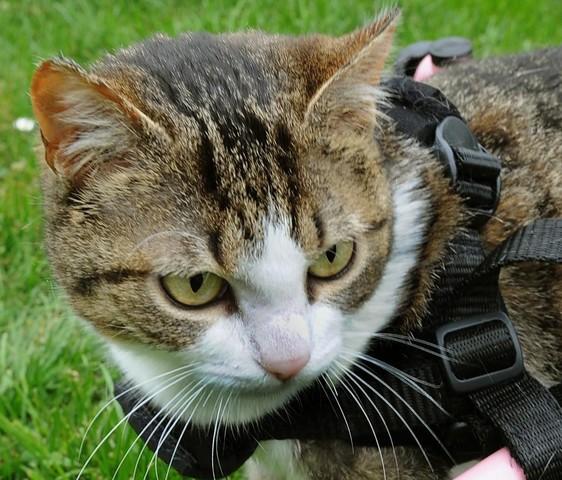 Brigitta il gatto sulla sedia a rotelle tiscali notizie for Uomo sulla sedia a rotelle